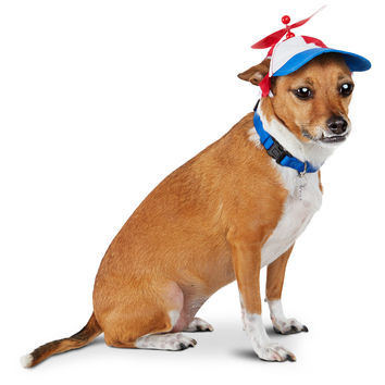 Pup Crew Propeller Dog Hat