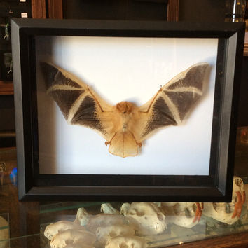 Mounted Painted Bat