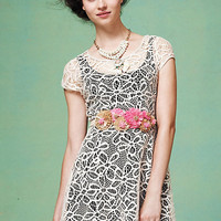 Maitland Lace Dress