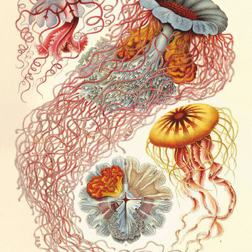 Jellyfish Vintage prints old prints Nautical art print Ocean Decor Natural History sea life art antique prints nature print 8x10 art print