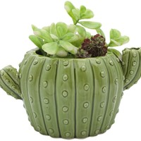 Cactus Ceramic Flower Pot - LAST ONE!