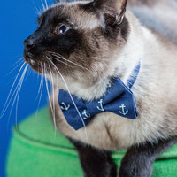 Fur-st Mate Cat Collar