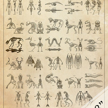Mythical Creature and Cryptid Skeleton Identification Chart Faux-Scientific Print