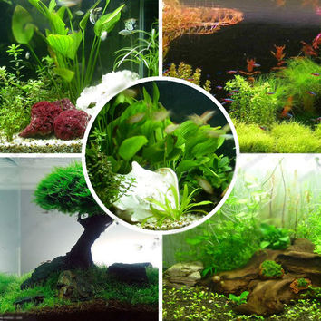 aquarium grass seeds family easy plant seeds fish tank dedicated water grass seed variety random send 1000 particles bag