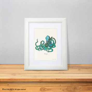 Octopus print-watercolor octopus print-Coastal print-Sea life print-Nautical print-ocean wall art-ocean art-kraken print-NATURA PICTA-NPWP05