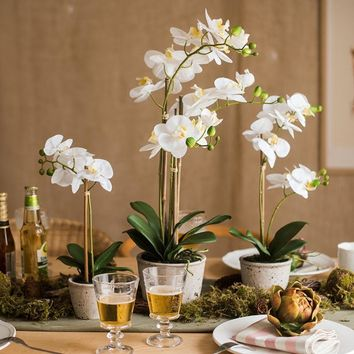 Rustic White Orchid Potted Plant in Various Size