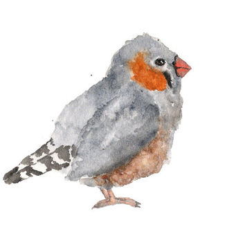 Bird art, watercolor painting, bird painting, watercolor animals, nature painting, watercolor bird, zebra finch, grey feathers, 7X5 print