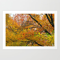 Autumnal Bliss Art Print by Cindy White Photo Art