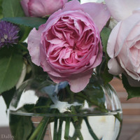 Still Life Photograph of Pink Roses in Glass Bowl, Nature Photography, Wall Decor, Shabby Chic Art.