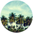 Palm Trees Circle Wall Decal