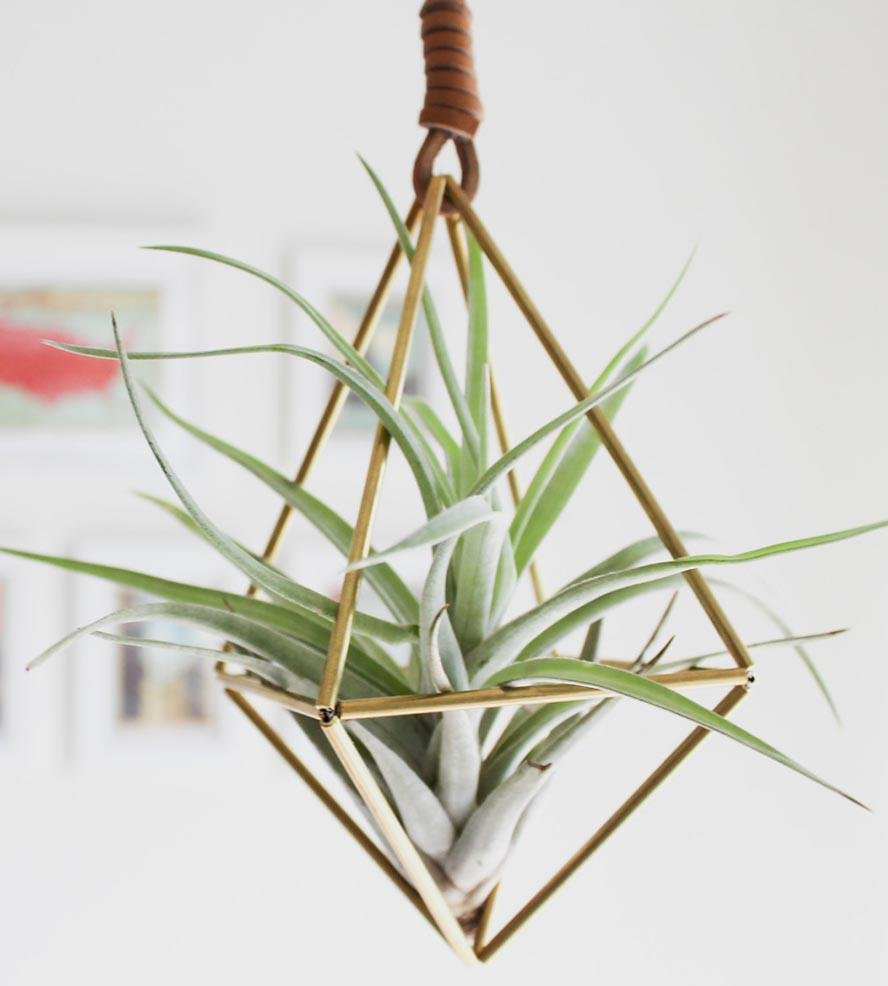 Himmeli diamond air plant ornament from scoutmob things for Air plant planters