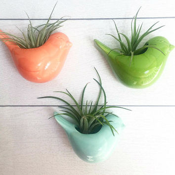 Cute Bird Magnetic Ceramic Air Plant Planter - Gift- Desk Decor// Home Decor//Gift//Kitchen Decor