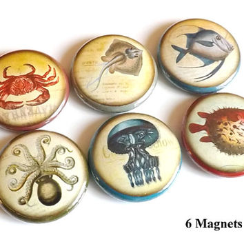 Fish Ocean Sea refrigerator MAGNETS 1 inch nautical crab jellyfish puffer octopus manta sand party favors stocking stuffers flair pins beach