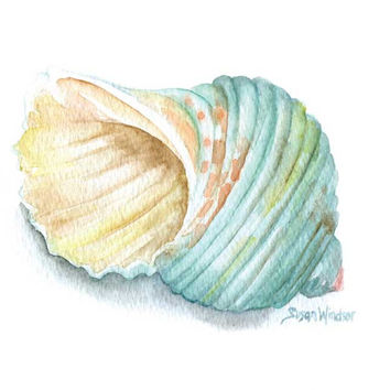 Green Turbo Seashell Watercolor