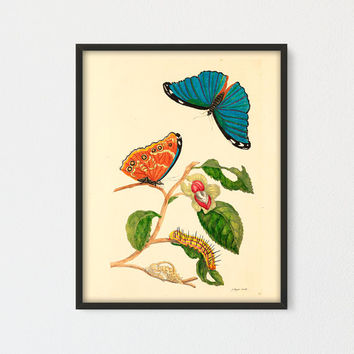 Wild Medlar Tree with Morpho menelaus Printable, Botanical Print, Butterfly and Caterpillar, Natural History Art by Maria Sibylla Merian