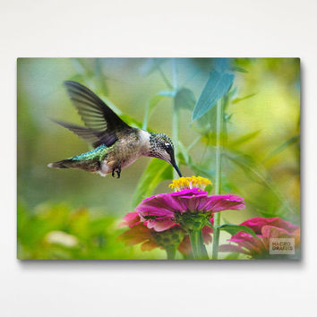 Hummingbird Canvas Art Print, Nature Photography, Bird Decor Print
