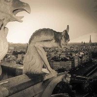 Paris Notre Dame Gargoyles Fine Art Photography Print