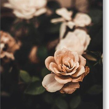 Rose - Greeting Card