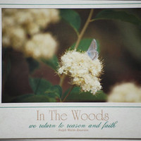 In The Woods  636