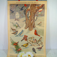 Antique Poster Pennsylvania Winter Birds Litho by Jacob Bates Abbott 1946 - Third in Series Distributed by the Pennsylvania Game Commission