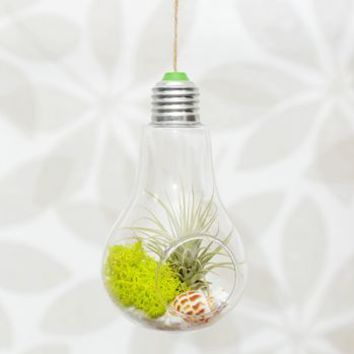 Hanging Lightbulb Air Plant Terrarium