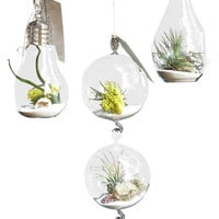 3 Airplant Air Plant Terrarium Set