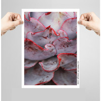 Purple Agave Plant Photography/ OPEN EDITION prints / Desert plants and Sonoran desert Photography / Purple, black, red, white, pale green