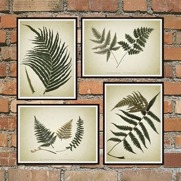Fern Antique Botanical Print Set of 4, Vintage Botanical Home Decor, Antique Book Plate Illustration, Giclee Picture, Fern Prints *6*