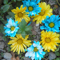 Alphabet Letter O Photograph Digital blue and yellow flowers