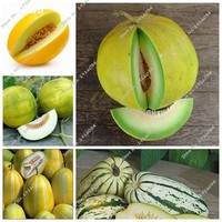 French Sweet Melon Honey Dew Melon Seed Natural Growth, Creeping Vine Herb Plant, Most Popular Fruit Seed Easy Grow 40 Pcs