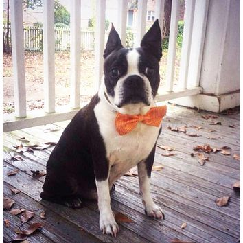 Orange Dog Bow tie, Thanksgiving accessory, Gift idea, Unique, Dog Lovers, Fall, Party idea