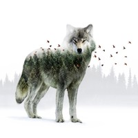 Wild I Shall Stay | Wolf Art Print by Soaring Anchor Designs | Society6