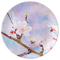 Japanese Cherry - Sakura In Bloom Porcelain Plates