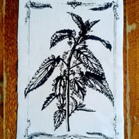 Stinging Nettle Patch Plant Botany Diagram Illustration Silkscreen Herbology Nature Punk