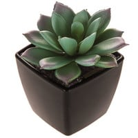 Small Square Succulent | Hobby Lobby | 1627884
