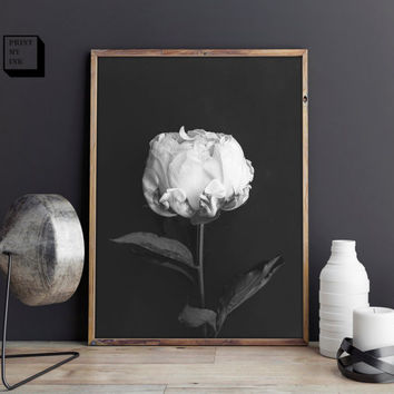 Rose Print, White rose, Black and white photography, Rose Photography, Romantic Gift,  Rose download, Rose Printable, Rose poster, Boho Art