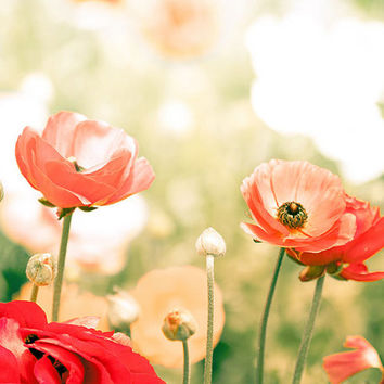 nature photography floral flower photography fine art 8x10 24x36 autumn photography summer red poppies orange green cream large photography