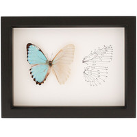 Framed Curiosity Butterfly Skeleton Insect Art