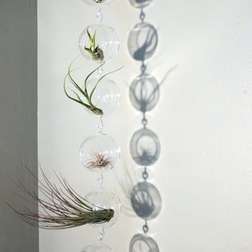 Column of Six Hanging Double-Hook Glass Orb Terrariums Complete with Six Exotic Tillandsia Air Plants. Gorgeous Minimalist Design.
