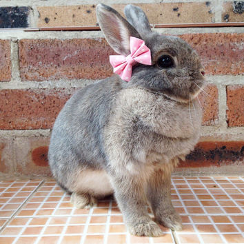 Baby pink bows for bunnies, pet rabbit bows, pet rabbit accessories, pet rabbit clothing