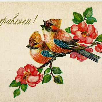 Birds, Vintage Russian Postcard unused 1975