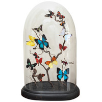 Specimen Butterflies under Glass Dome