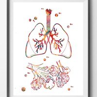 Lungs and alveoli watercolor print