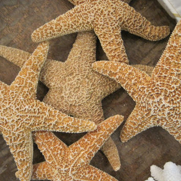 "Beach Decor Natural Sugar Starfish 4-5""  (3)  - Starfish - Seashells - Seashell Supply - Coastal Home Decor - Beach Decor"