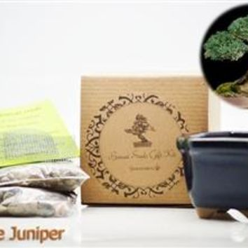Chinese Juniper Bonsai Seed Kit- Gift - Complete Kit to Grow