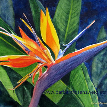 Tropical Bird of Paradise Flower Painting, Exotic Art Print of Original Watercolor, Floral Home Decor Wall Art Gift, Barbara Rosenzweig
