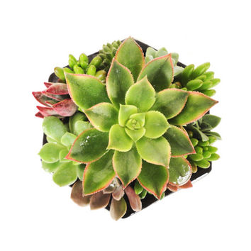 Hexagon Succulent Garden