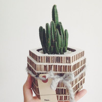 The Honeycomb Cactus Planter. Recyclable Cardboard. Cactus. Cacti. Plants.