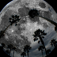 Lunar Palm Trees Art Print by Derek Fleener