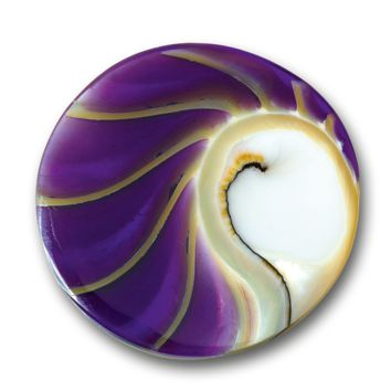 Mi Moneda Nautilus Natural Shell Coin